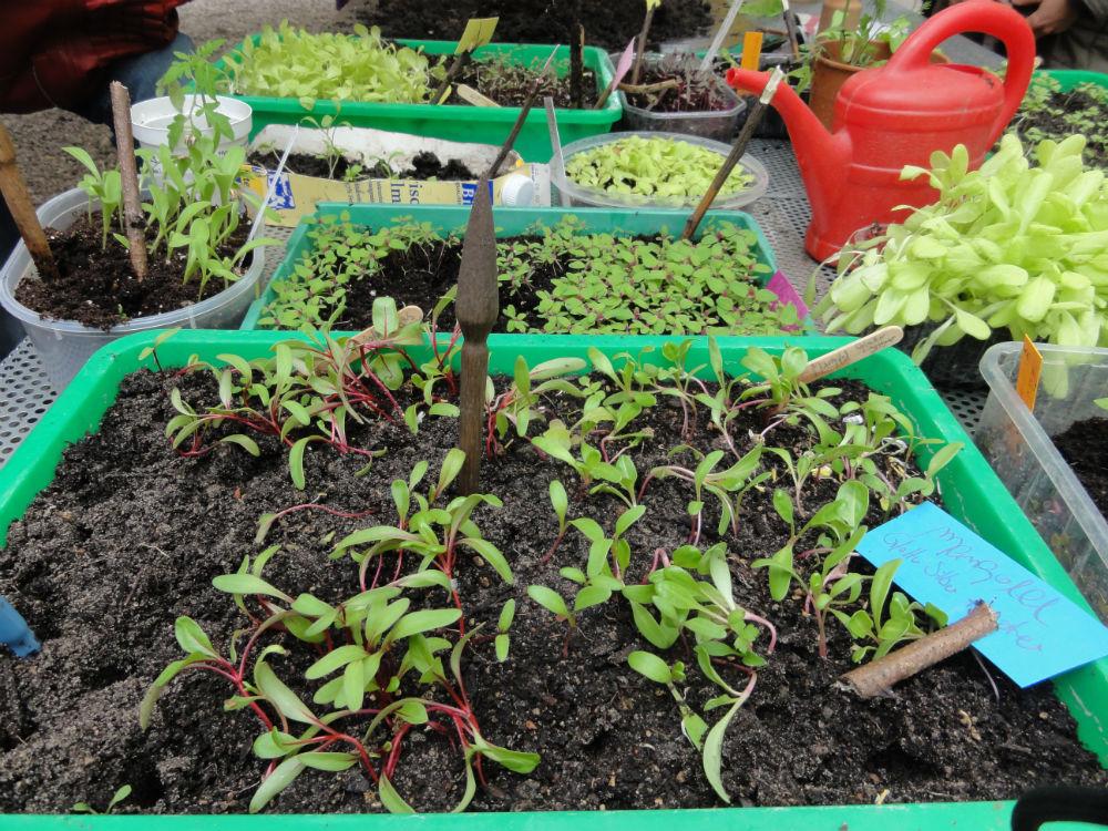Berlin summt beim pflanzen tausch markt im for Berlin pflanzen